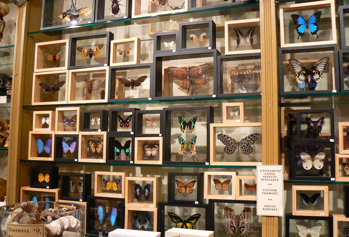 Framed Butterfly Displays