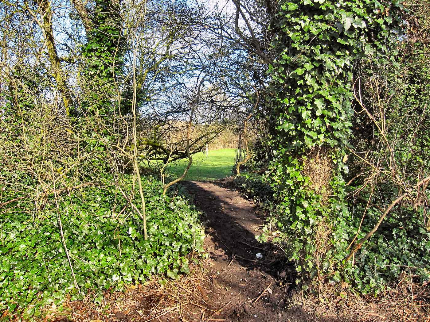 Shortcut through trees