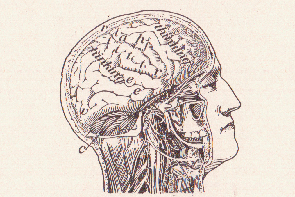 Our Brain, The Human Body and Health Revised by Alvin Davison