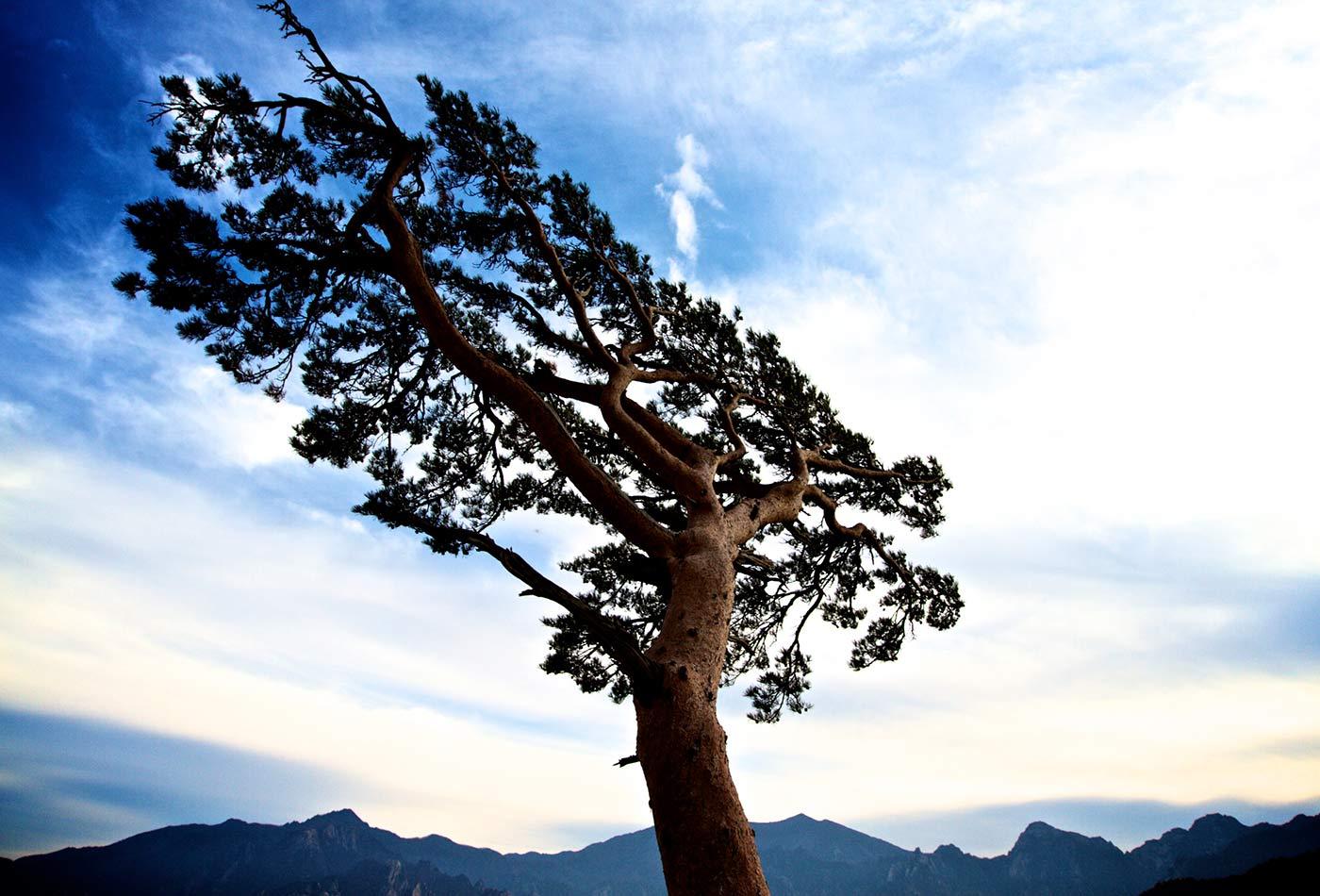 Resilience - Seoraksan National Park, Korea.