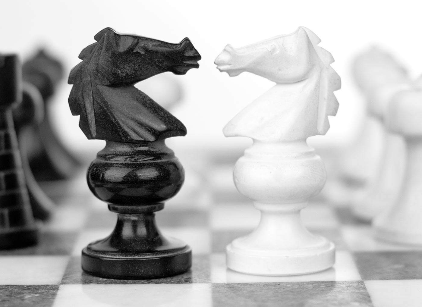 Chess Knights In Battle.