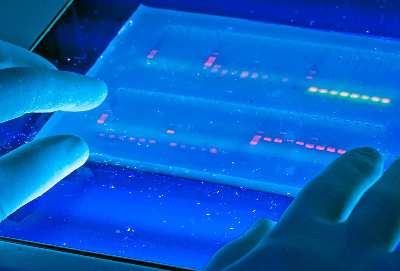 DNA Lab.