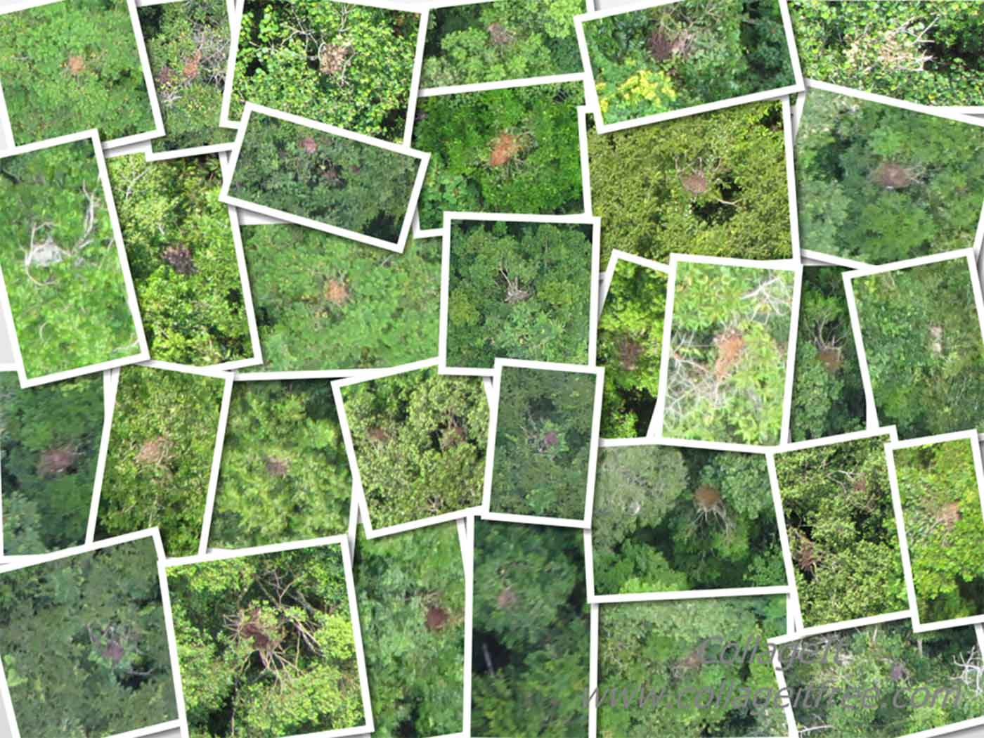 Collage of orangutan nests in SE Asian rain forests taken by cameras on board Conservation Drones.