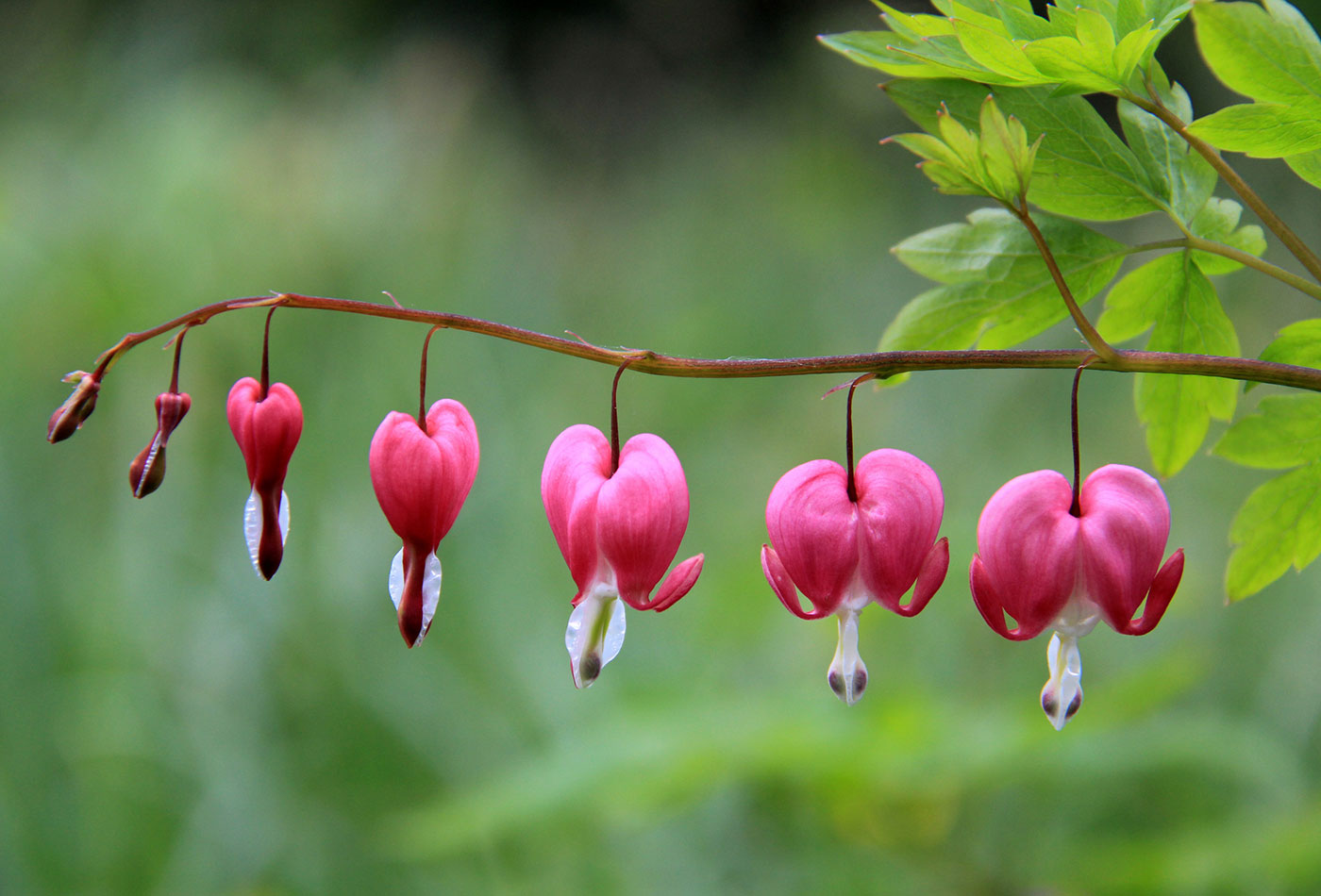 Growing Hearts.