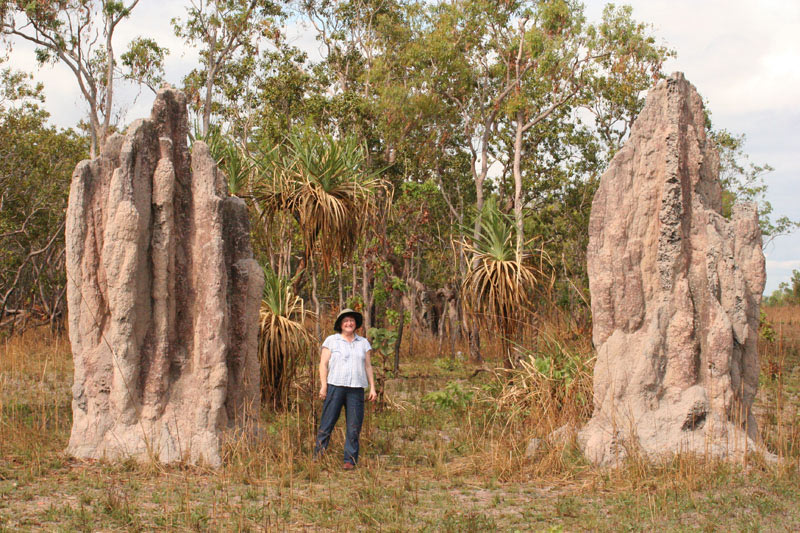 termite cathedral mounds
