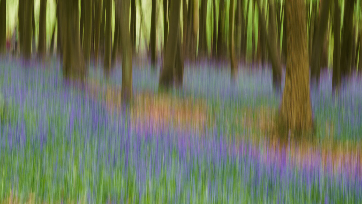 An example of intentional camera movement (ICM), which creates an impressionistic effect.