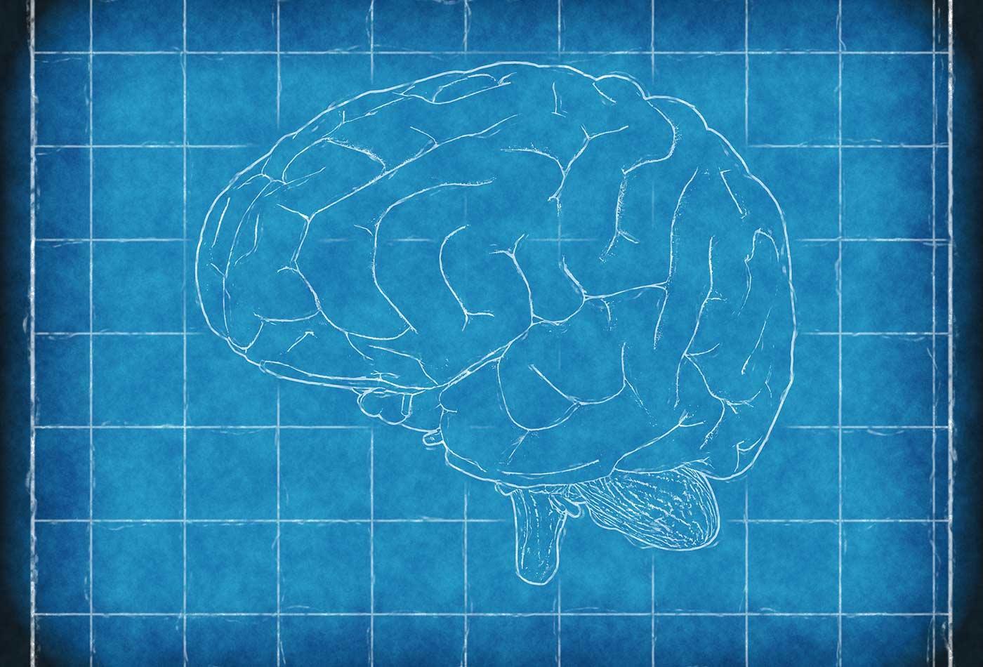 Brain blueprint.