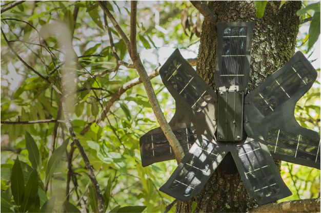One of Rainforest Connection's modified phones, placed to monitor sounds associated with illegal loggers (Source: Rainforest Connection)