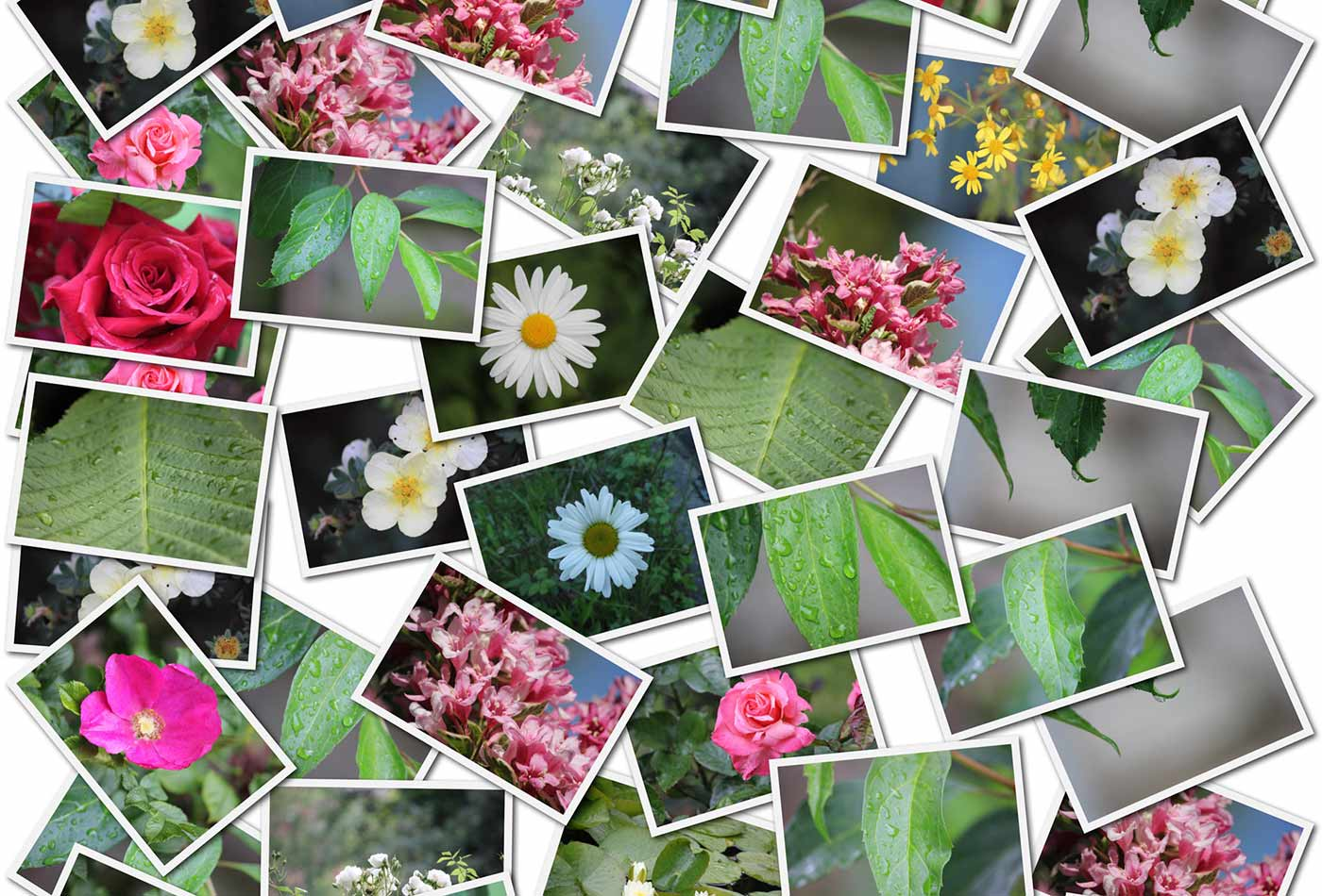 Flower and leaf photo collage.