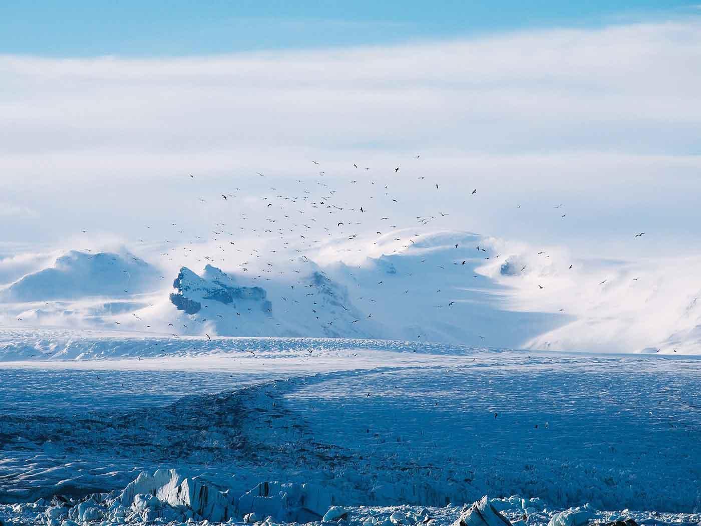 Glacier, Snow, Ice, Mountain, Flow