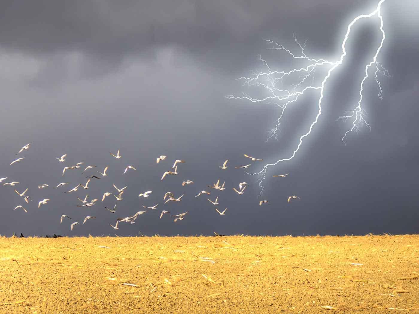 Photo of birds and lightning