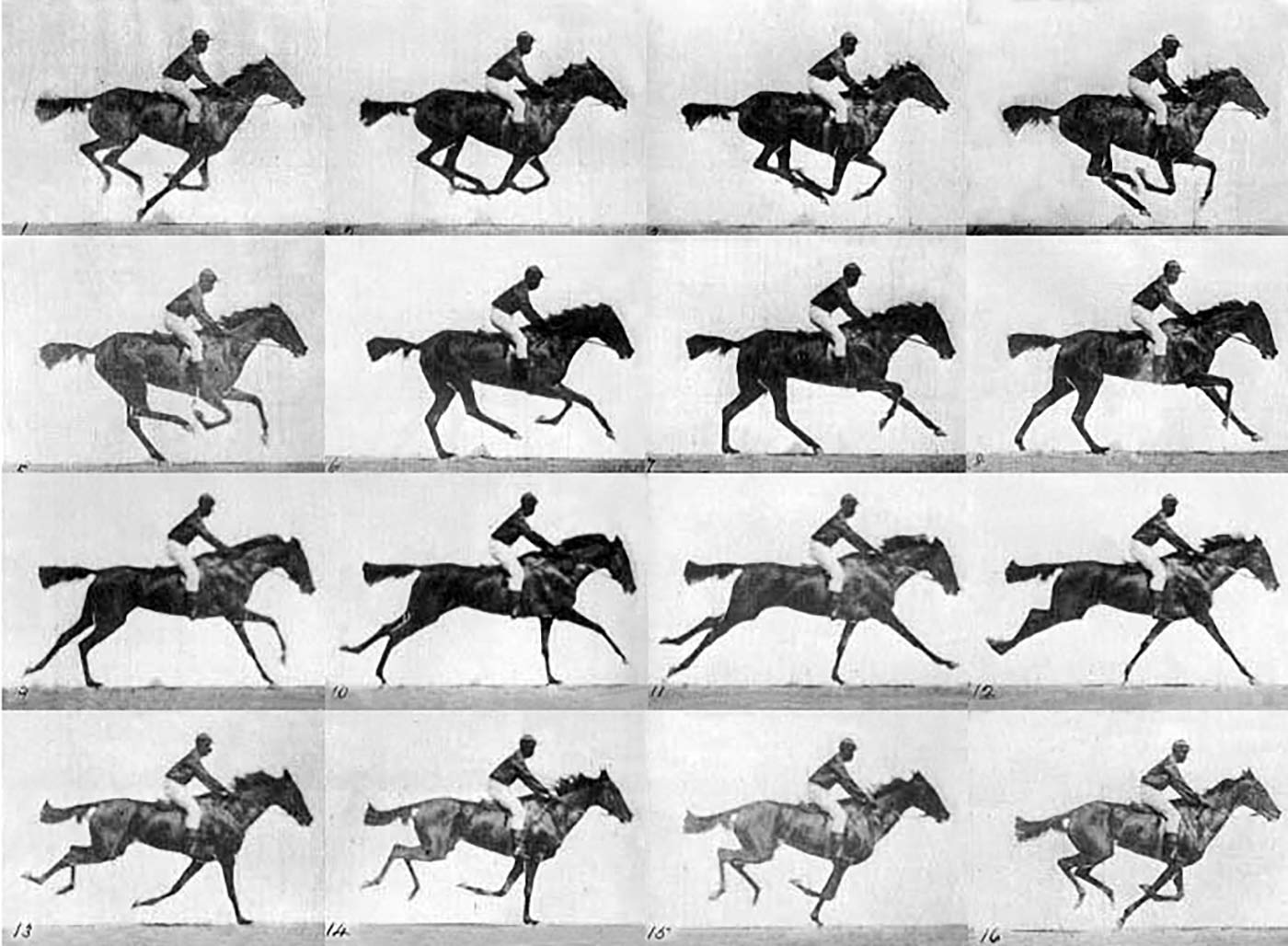 Sequence of a race horse galloping. Photos taken by Eadweard Muybridge (died 1904), first published in 1887 at Philadelphia.