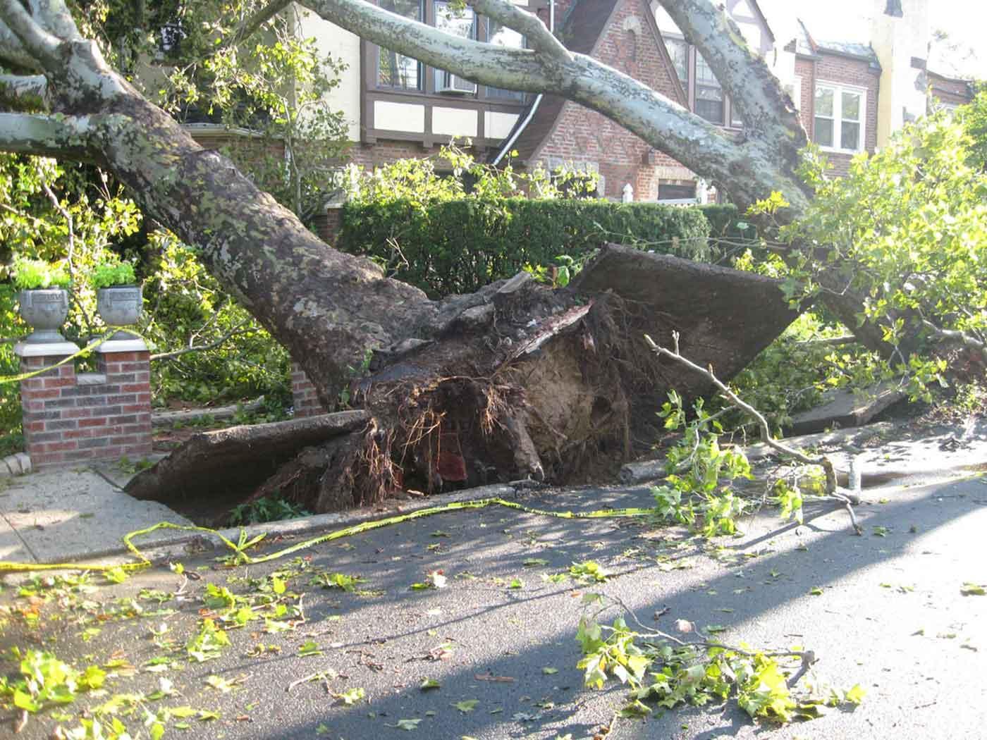 Fallen trees.
