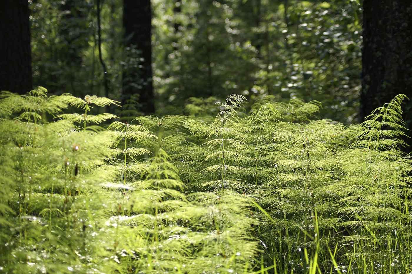 Growing vegetation