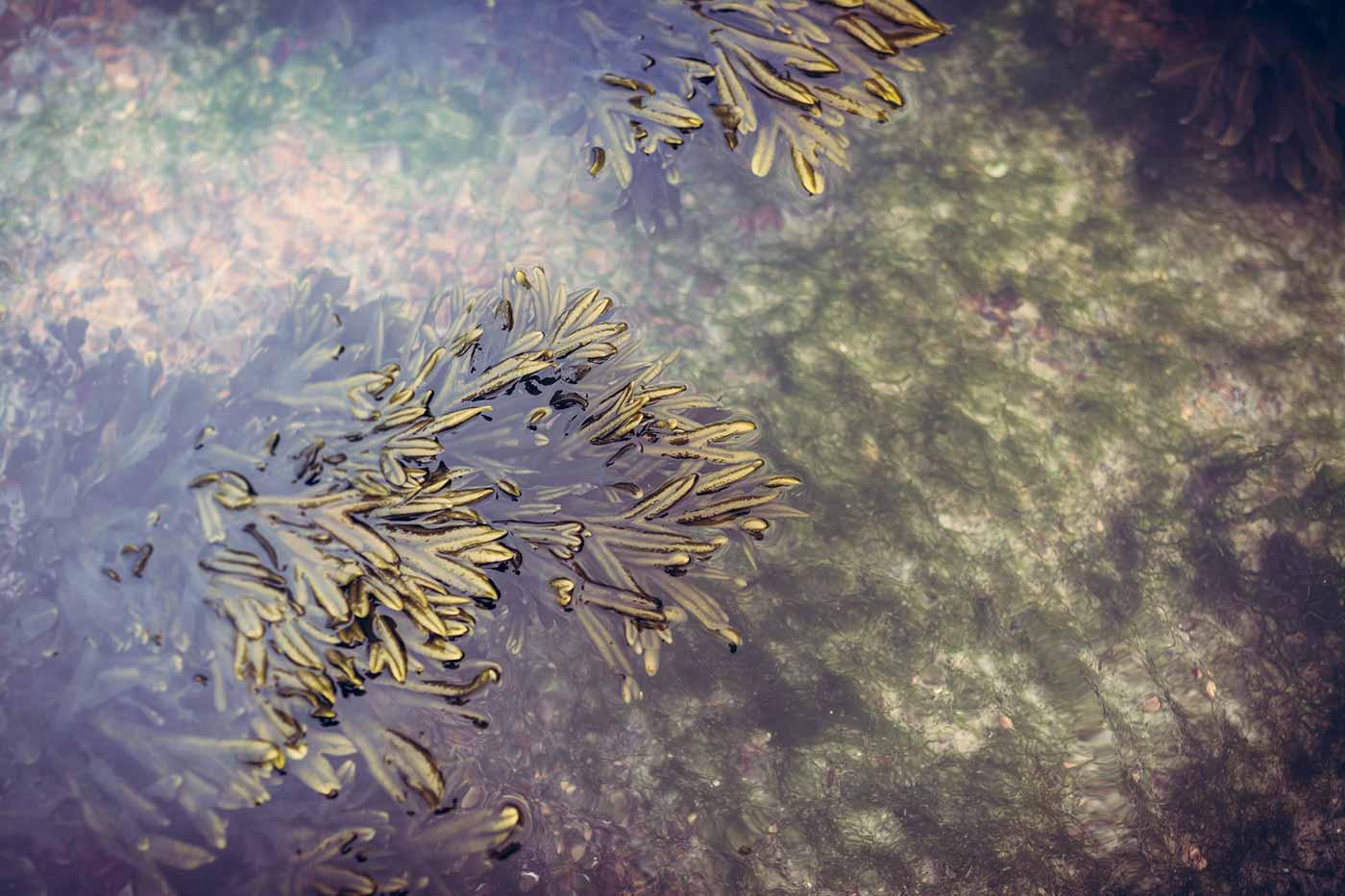 Seaweed in water