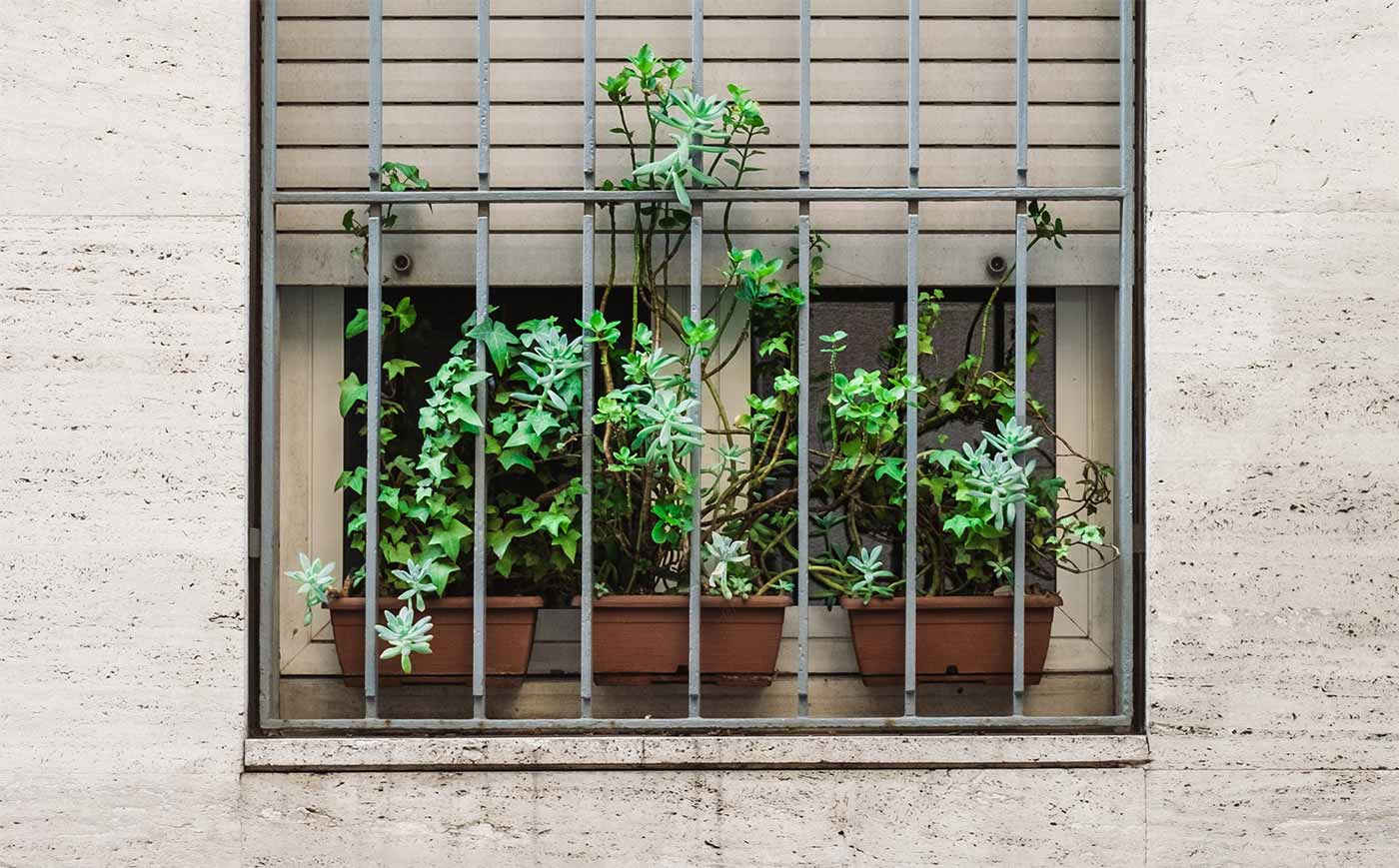 Plants in a window with bars