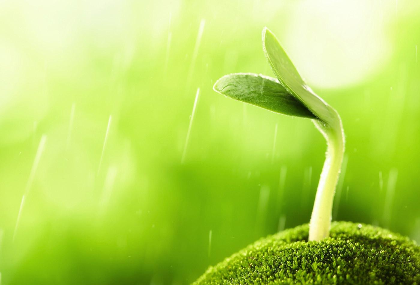 Sprouting seedling.