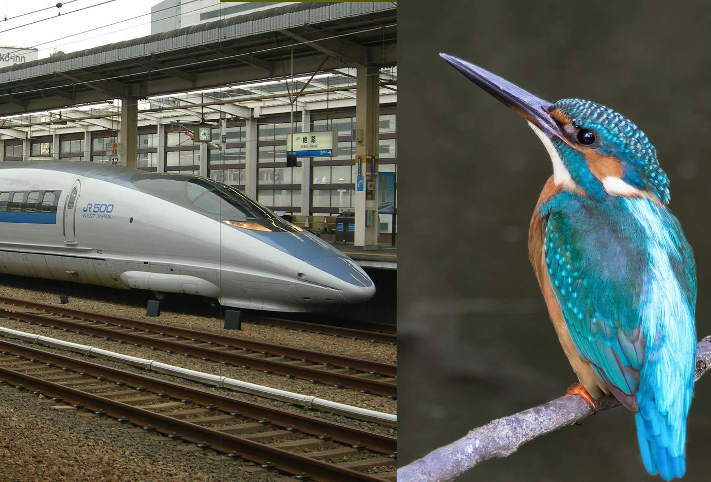 Left: a JR West 8-car 500 Series Shinkansen train; Right: Common kingfisher, whose beak inspired the train's nose design.