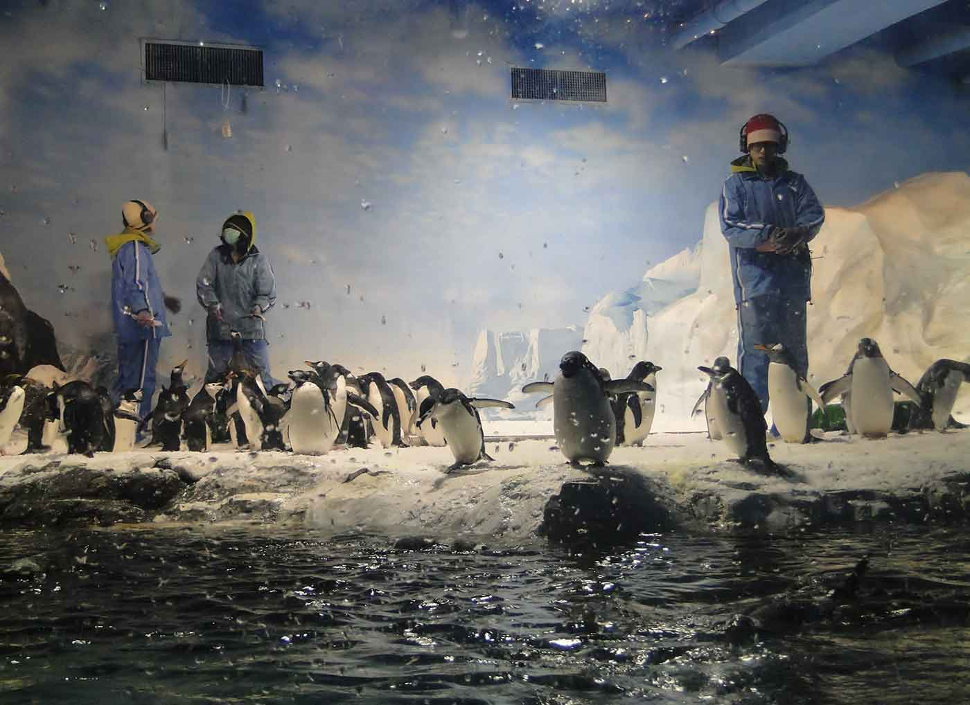 Photo of penguins at a zoo with handlers