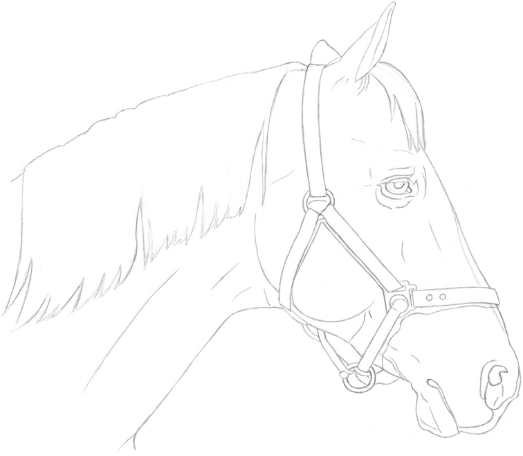 Horses drawings in pencil step by step - photo#21