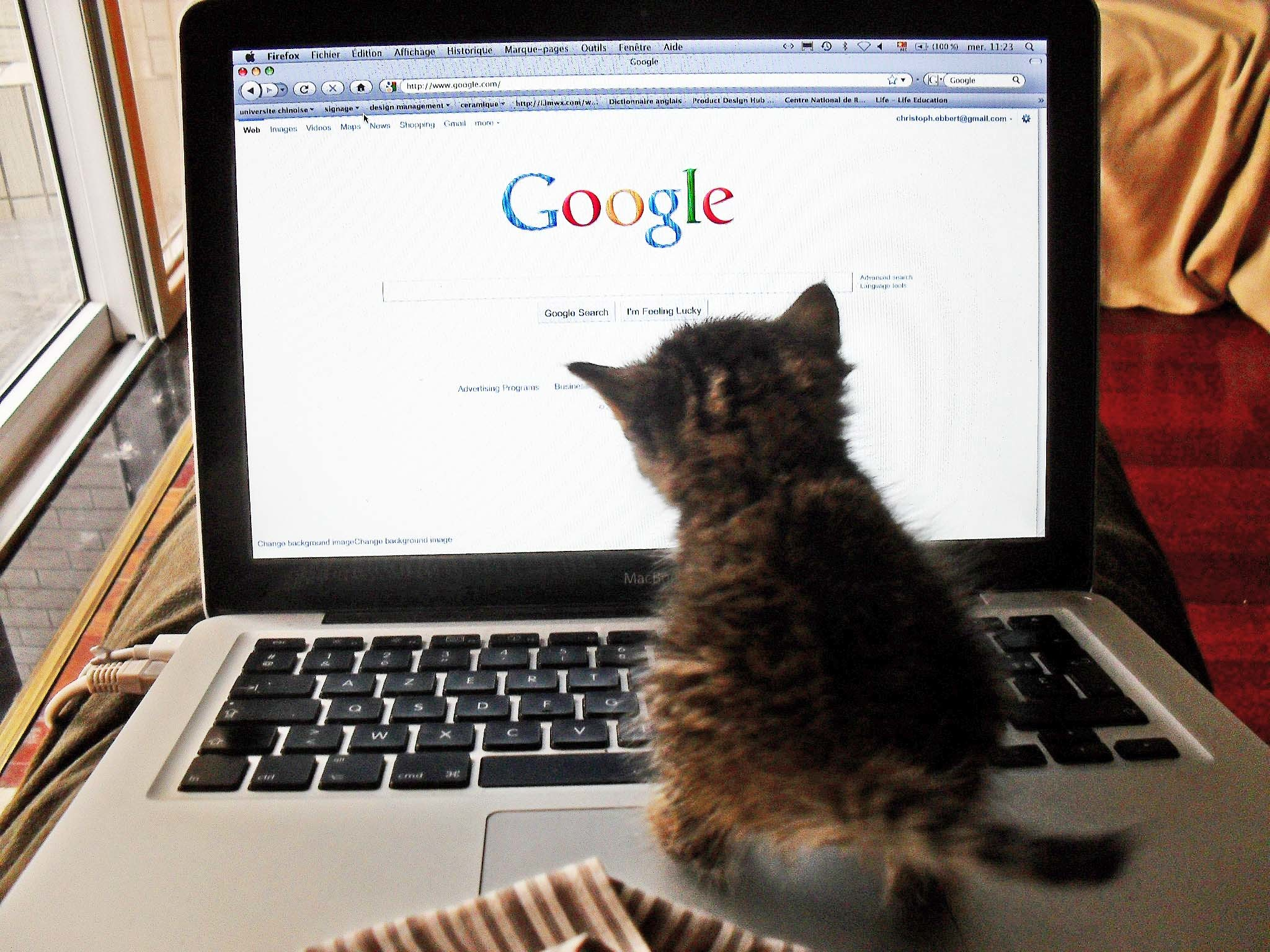 "Fluffy had finally found Google, after numerous failed attempts. Next challenge: figuring out how to type ""bird."""