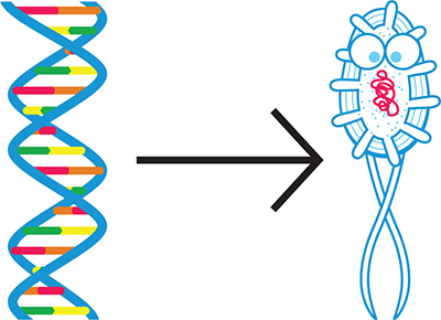 The goal of synthetic biology. Synthetic biology aims to write DNA (left) that instructs a cell or organism (right) to behave according to design specifications.