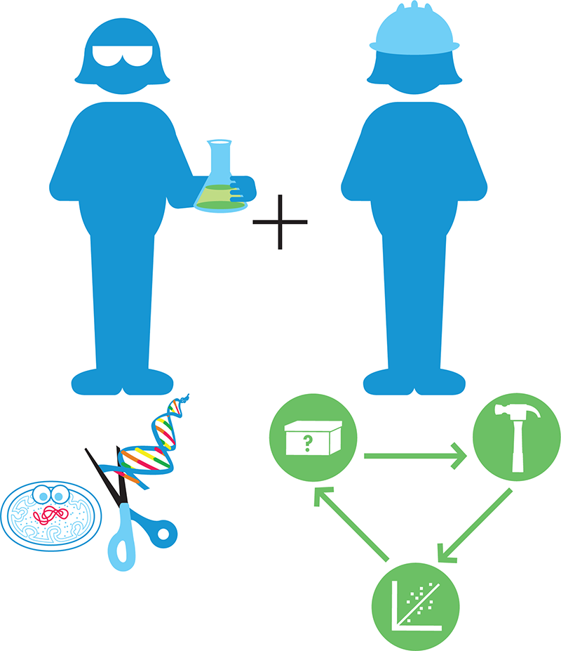 The interdisciplinary nature of synthetic biology. Synthetic biologists combine the wealth of knowledge and techniques from molecular biology (left) with engineering principles (right), including the design-build-test cycle that's a hallmark of engineering disciplines.