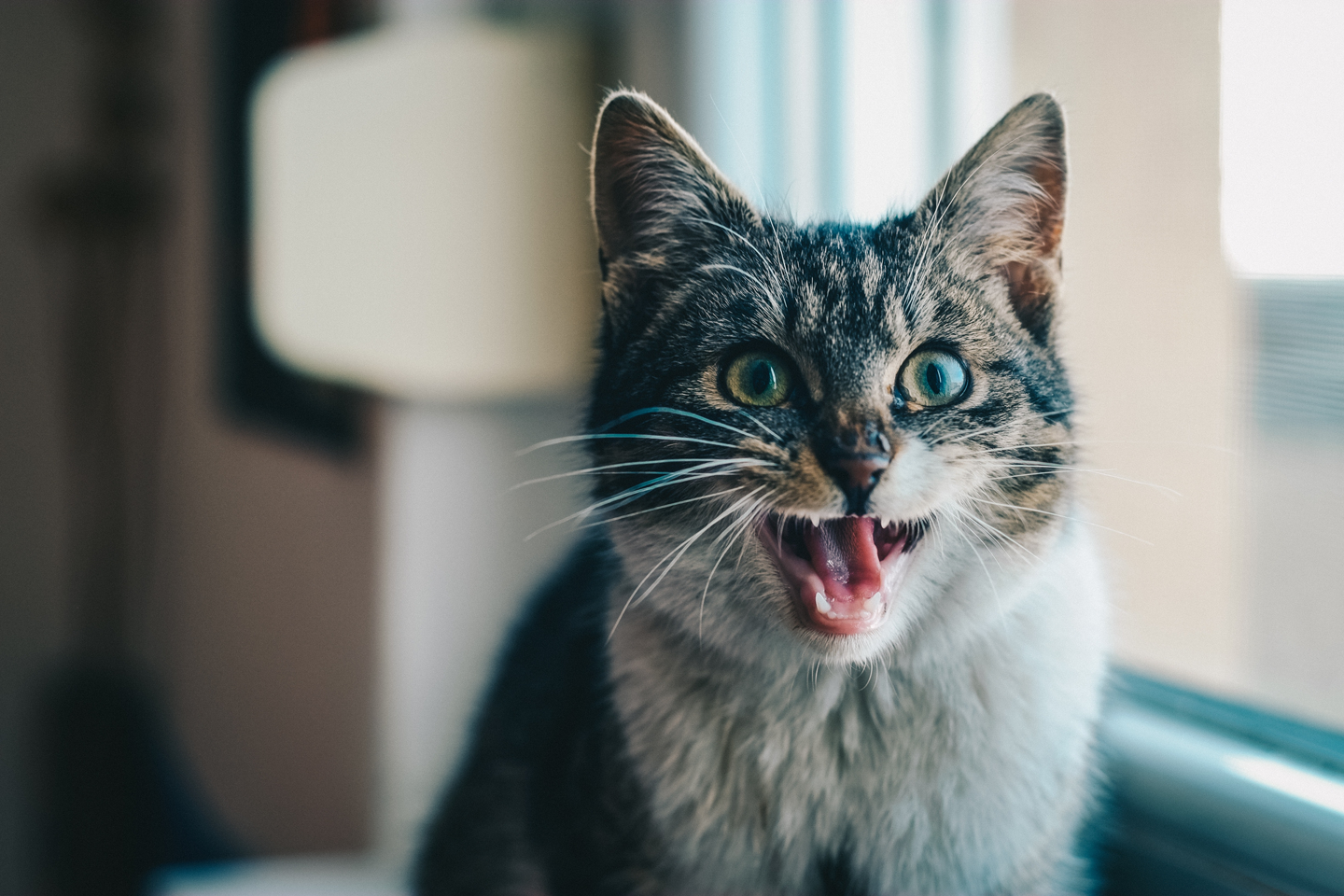 Actual picture of Zane the moment he learned developers were iterating code on production at Etsy. (Photo by Jurag Varga from Pexels/Pixabay)