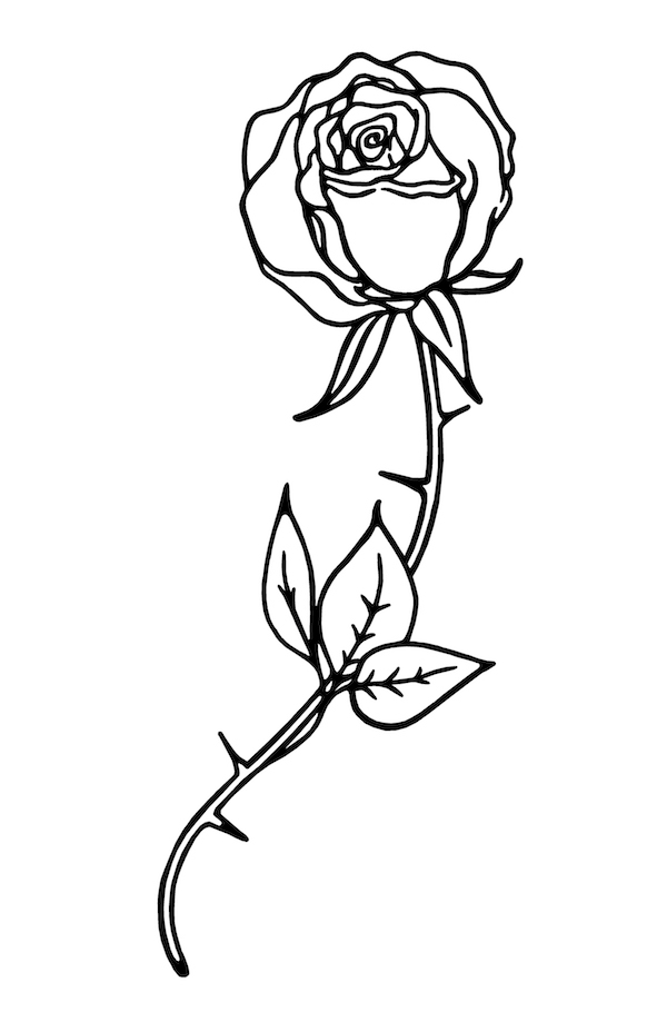 Image of a sketch of a rose