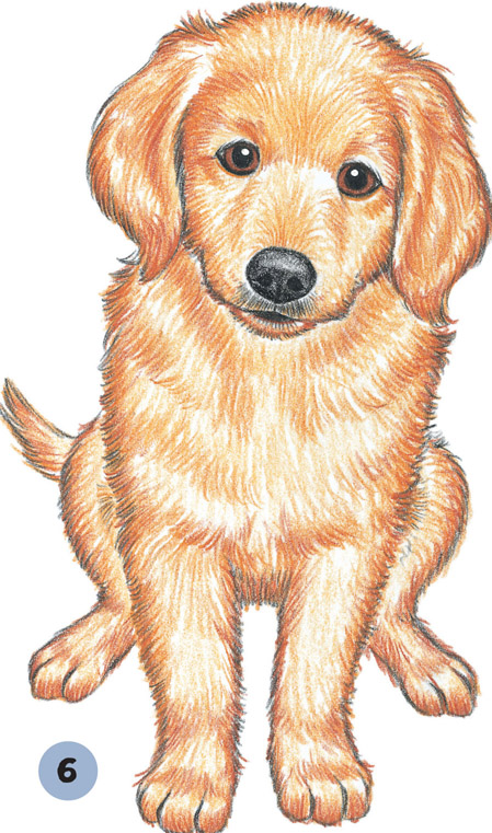 golden retriever puppy dogs puppies book