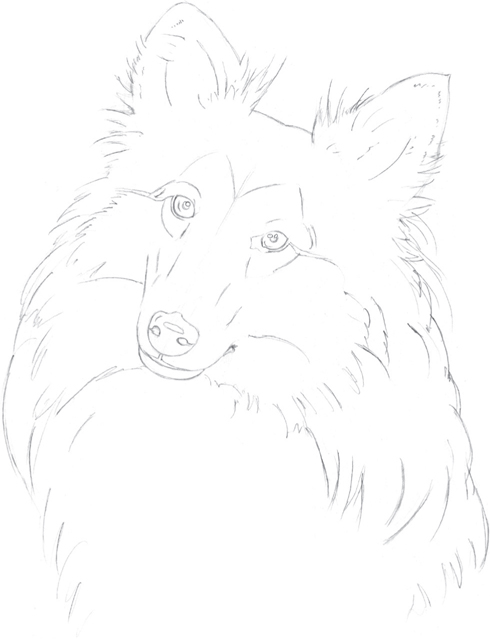 Shetland Sheepdog Drawing Animals In Colored Pencil Book