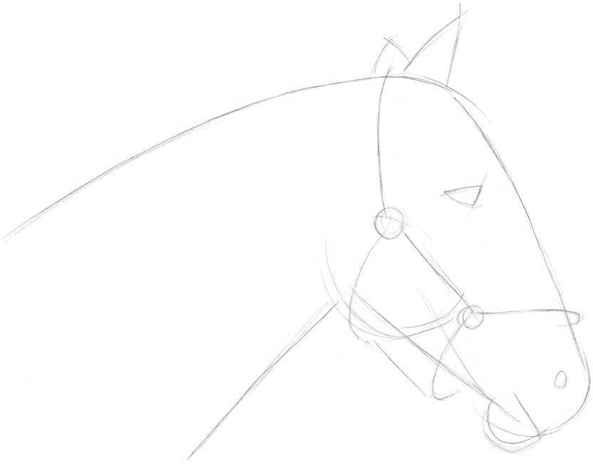 Step one with an hb pencil i use basic shapes to sketch the head neck ears and eye then i draw the bridle curving it to follow the shape of the