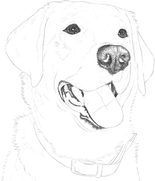 Labrador Retriever Drawing Dogs Cats Book