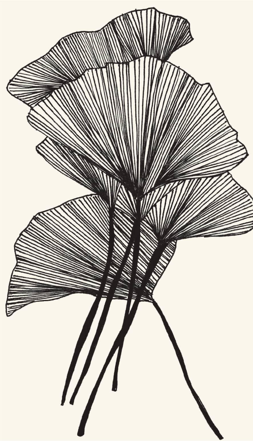 Exercise 8 line work botanical drawings drawing in black