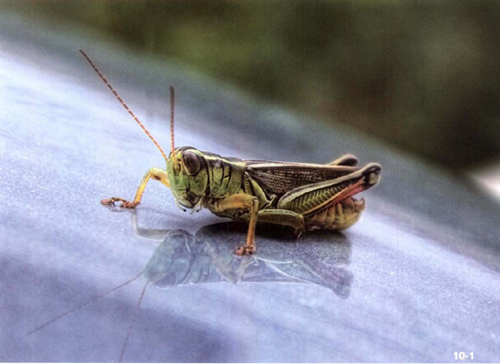 ABOUT THIS PHOTO A grasshopper is caught resting. HDR from a single raw exposure converted to three 16-bitTlFFs. (ISO 100, f/8, 1/160 second, Sony 18-70mm f/3.5-5.6 at 70 mm) © Robert Correll