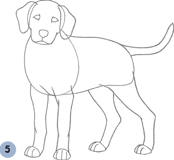 Dalmatian Puppy Learn to Draw Dogs Puppies Book