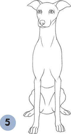 Italian Greyhound Learn To Draw Dogs Amp Puppies Book