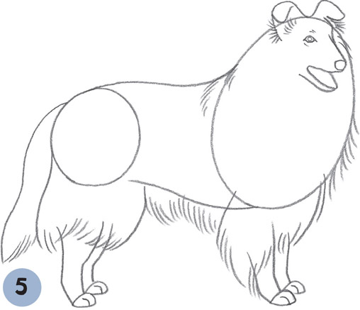 rough collie coloring pages - photo#25