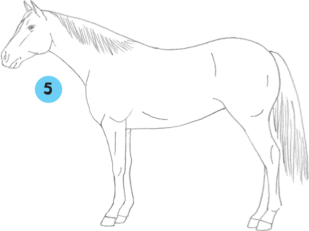 American Quarter Horse - Learn to Draw Horses & Ponies [Book]
