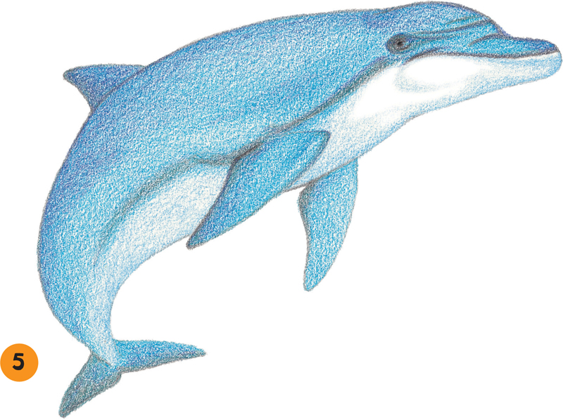 how to draw ocean creature