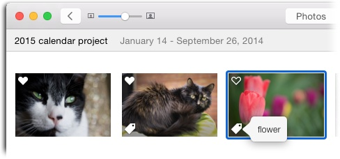 Once you choose View→Metadata→Keywords, you see the tiny tag icon shown here at the lower left of any thumbnail or open image that has keywords assigned. Give it a click to see the specific keywords assigned to that image.