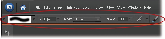 When a tool is active, the Options bar changes to show its available settings (circled). Elements tools are highly customizable, letting you do things like adjust a brush's size and shape. Here you see the options for the Brush tool. (The caterpillar-like thingy at the left is a sample of the stroke you'd get from the current brush settings.)
