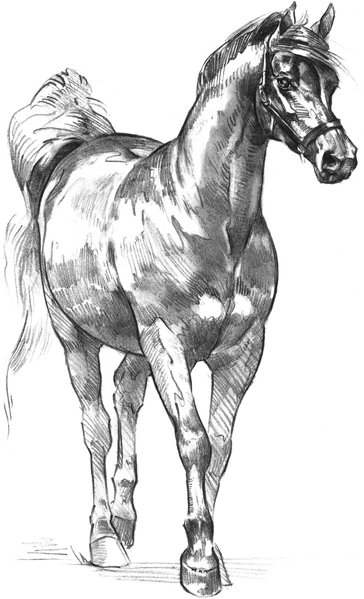 Horses The Complete Beginners Guide To Drawing Animals Book