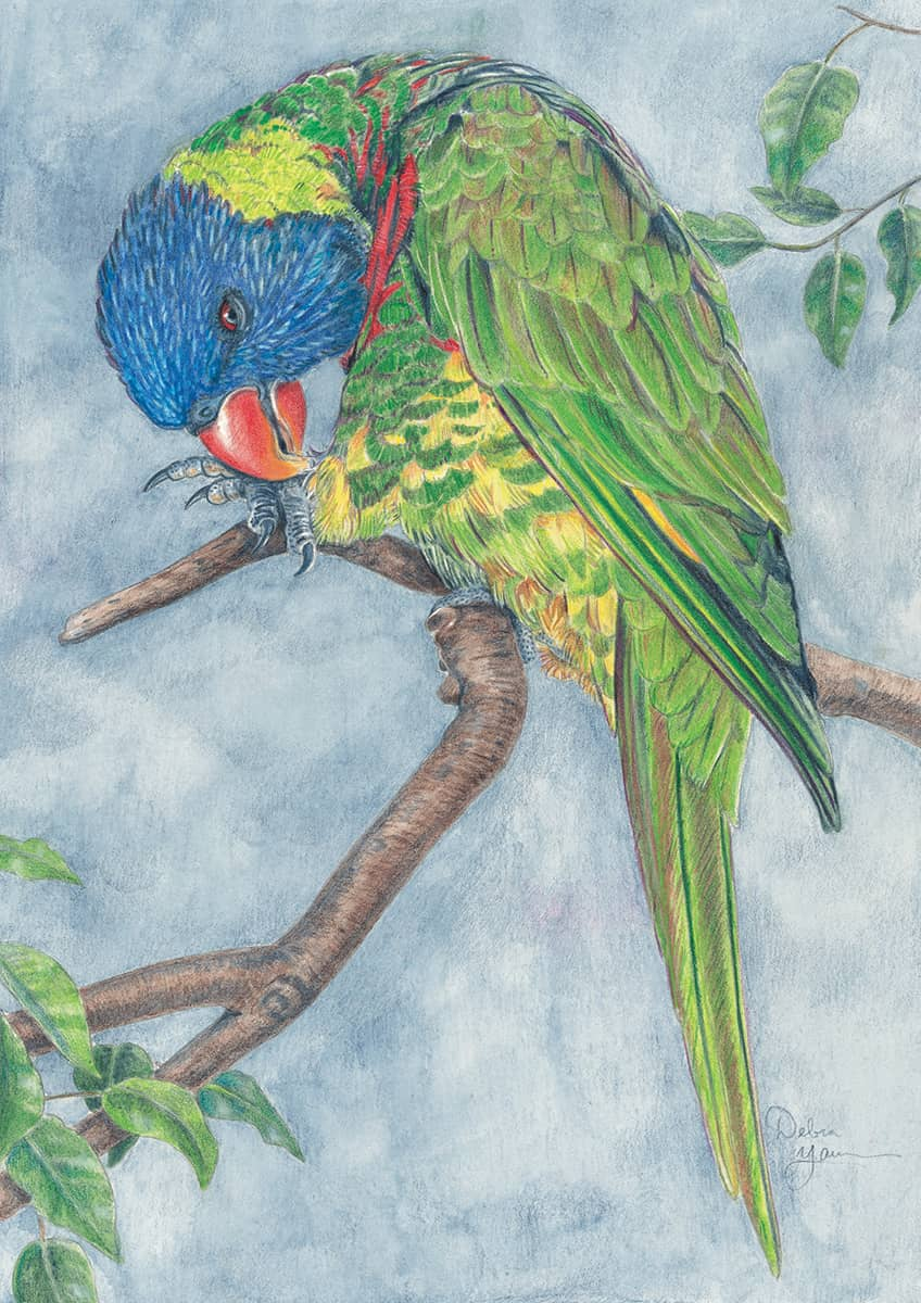 Drawing animals in colored pencil the complete beginners guide to