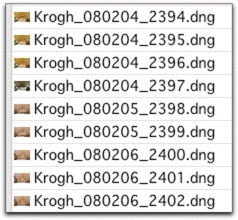 As you can see, if you use a database-style date near the front of the file name, your files will line up in chronological order. This is even more important if you use the DNG format because the filesystem will see date created as the date the DNG was made, not the date the picture was taken.