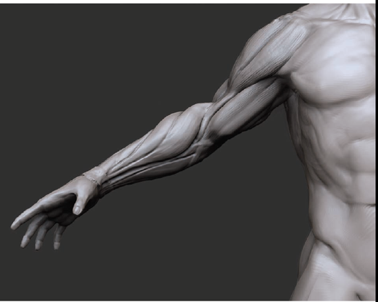 5 The Arms Zbrush Digital Sculpting Human Anatomy Book