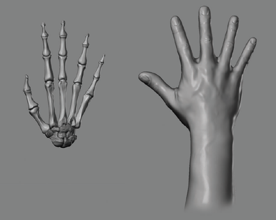 7 Hands Feet And Figure Finish Zbrush Digital Sculpting Human