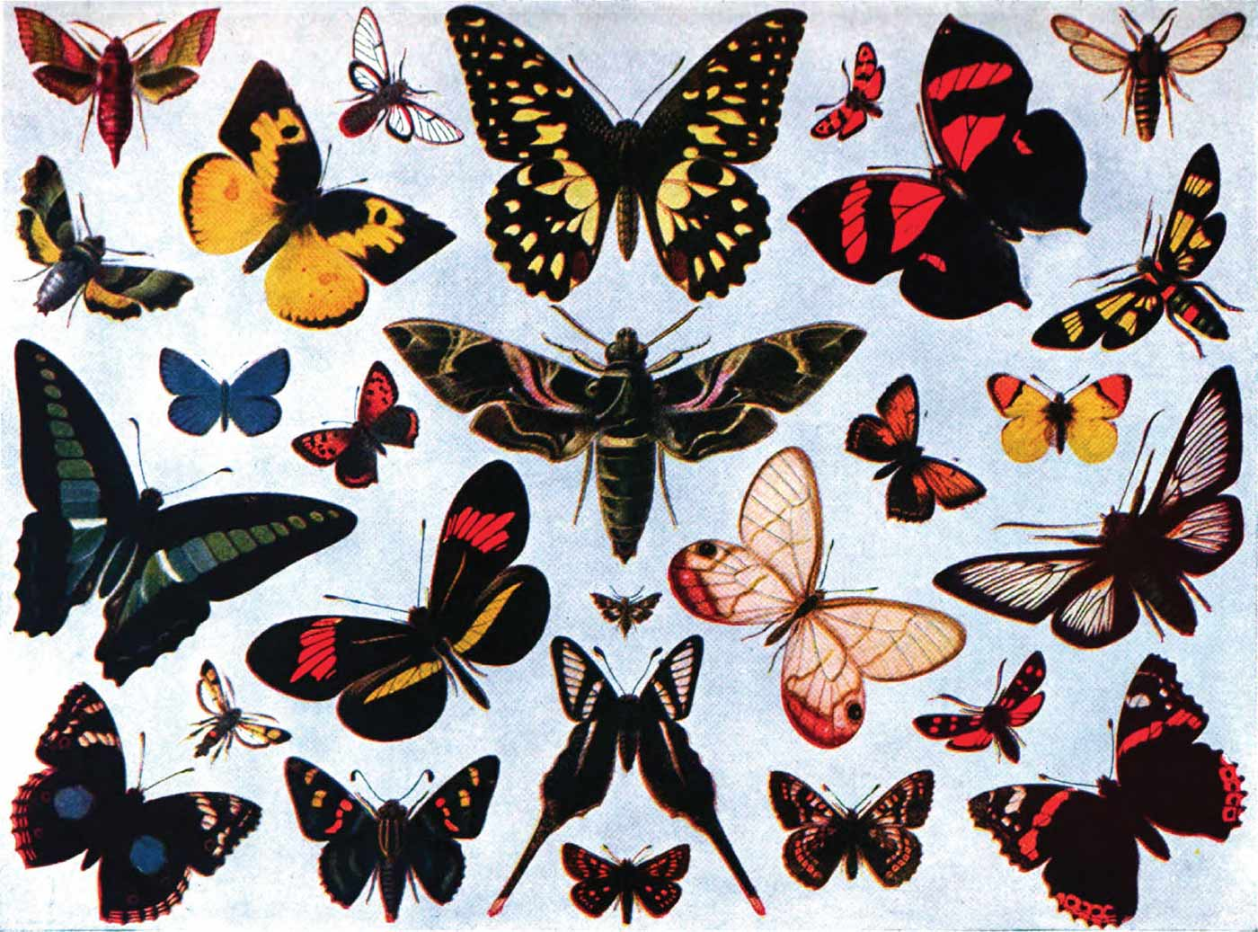 """""""The Encyclopedia Americana"""" color montage of a variety of unidentified butterflies and moths, 1920."""