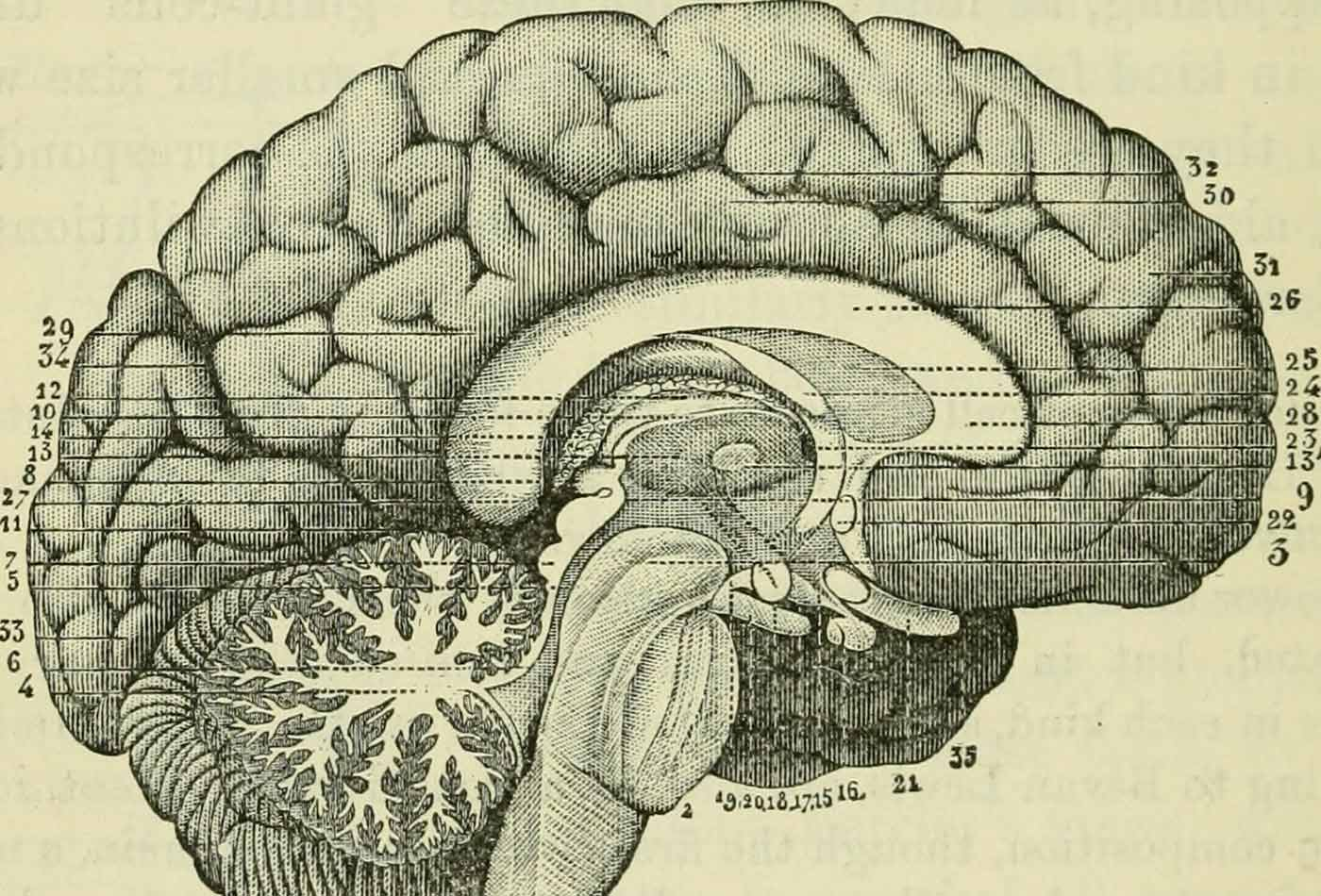 "Image from page 469 of ""The brain as an organ of mind"" (1896)."