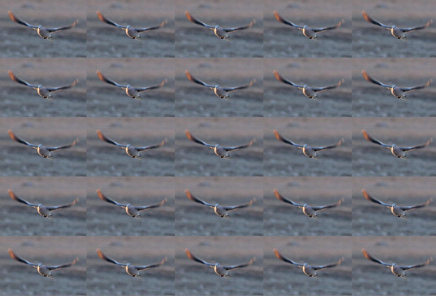 Duplicate birds in flight